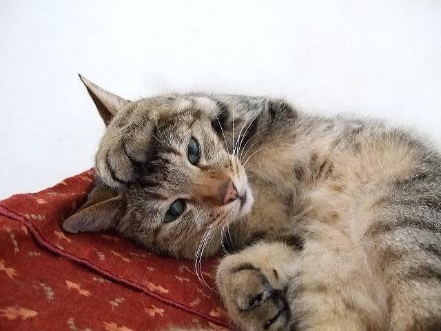 頭を抱える猫.jpg